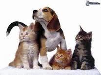 gyvūnų pervežimas